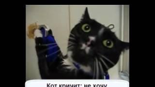 Кошки и вода приколы!