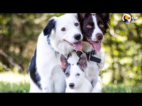 SMART Dogs Are SO TALENTED | The Dodo