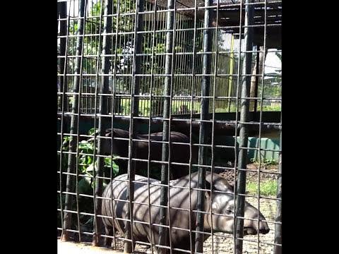 Guyana   Part 5 - (Zoo)