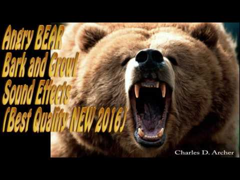 Angry BEAR Bark Angry BEAR Growl Sound Effects (Best Quality NEW 2016)