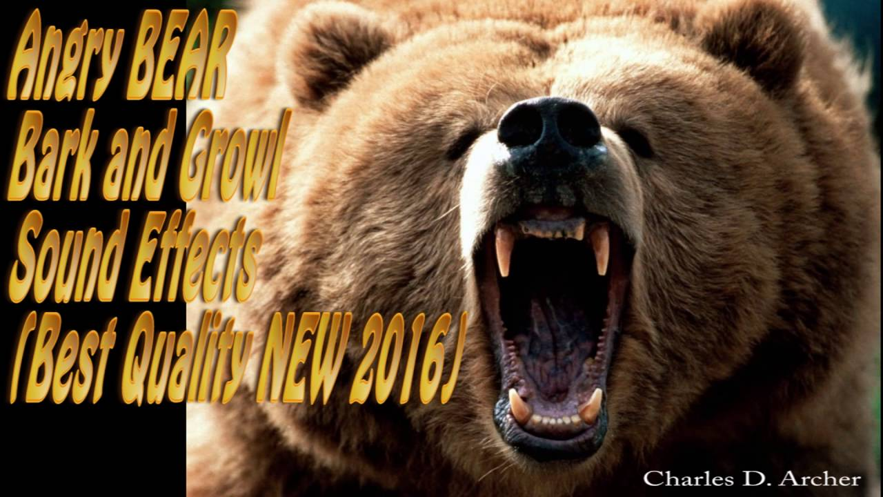 Angry BEAR Bark Angry BEAR Growl Sound Effects (Best ...