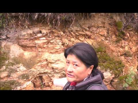 Bhutan Cowgrazing Project midst of Beautiful Mountains