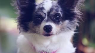 Как понять что собака заболела(СПАСИБО ВАМ ЗА ПОДПИСКУ! СОТРУДНИЧЕСТВО: sophie.otorva@gmail.com ДОГМАМА: http://vk.com/ilvreke ПАБЛИК: http://vk.com/sophieotorva ..., 2014-11-18T13:18:15.000Z)