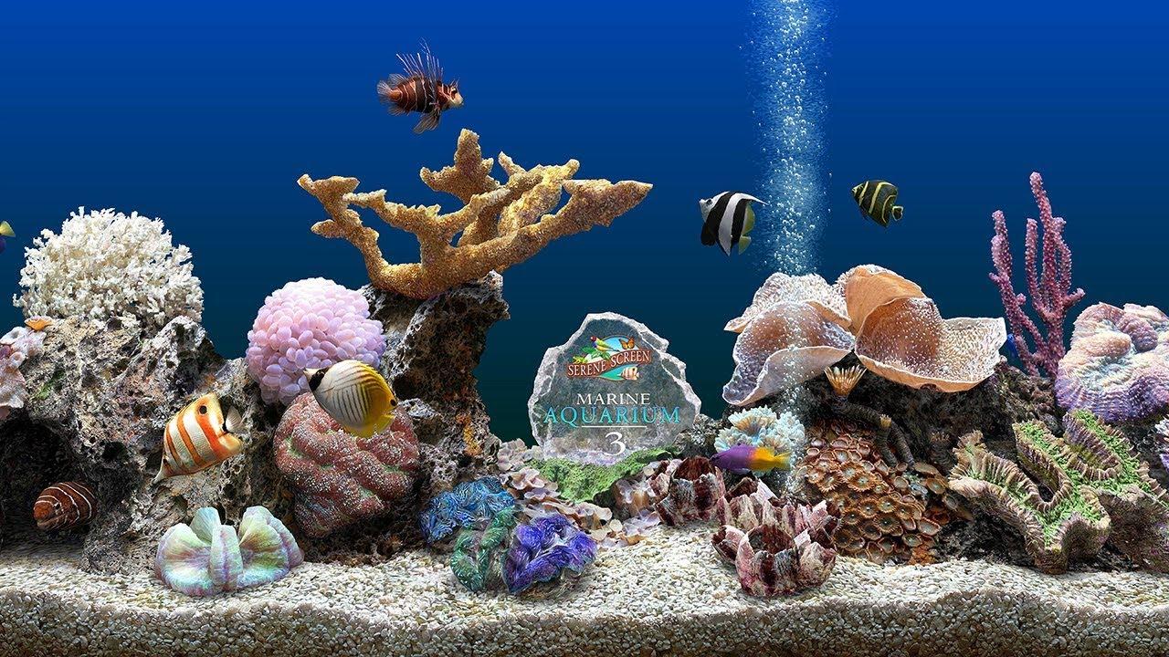 Marine Aquarium Screensaver 4k Uhd