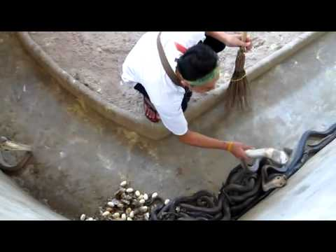 Cleaning the copra pit