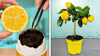 GROWING PLANTS IS SΟ EASY || Genius Ways To Grow Your Own Garden At Home