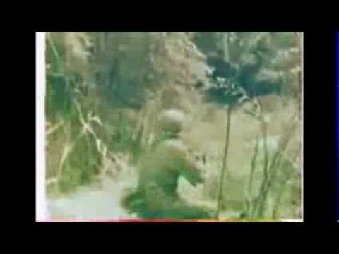 Vietnam War Footage Intense Close Quarters Combat *NO SOUND
