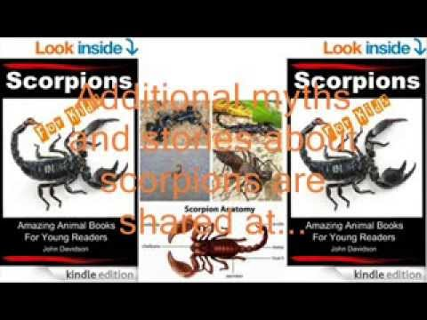 Myths And Stories About Scorpions Scorpions For Kids Amazing