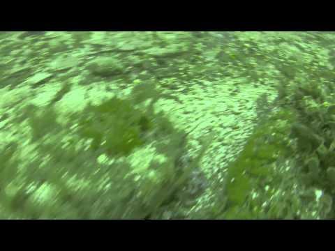 Diving Tete Quipet Lucky Dip off Herm