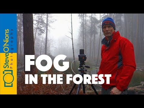 landscape-film-photography---a-forest-in-the-fog
