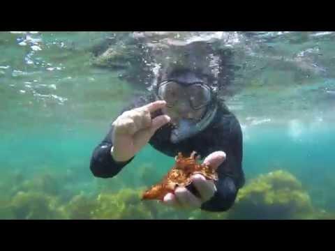 Catalina Island Snorkeling