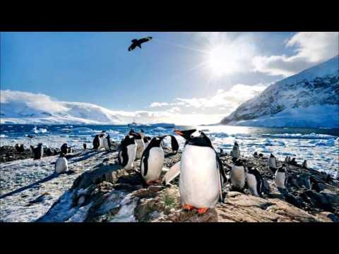 Neko Harbour Antarctica (HD1080p)
