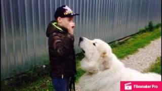 Дрессировка моей собаки 🐶 / The Artem Play