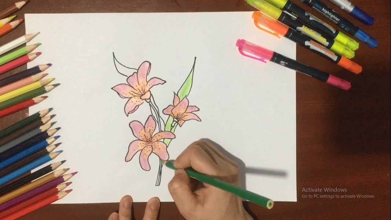 Vẽ Hoa Ly | Vẽ Các Loài Hoa Tập 4
