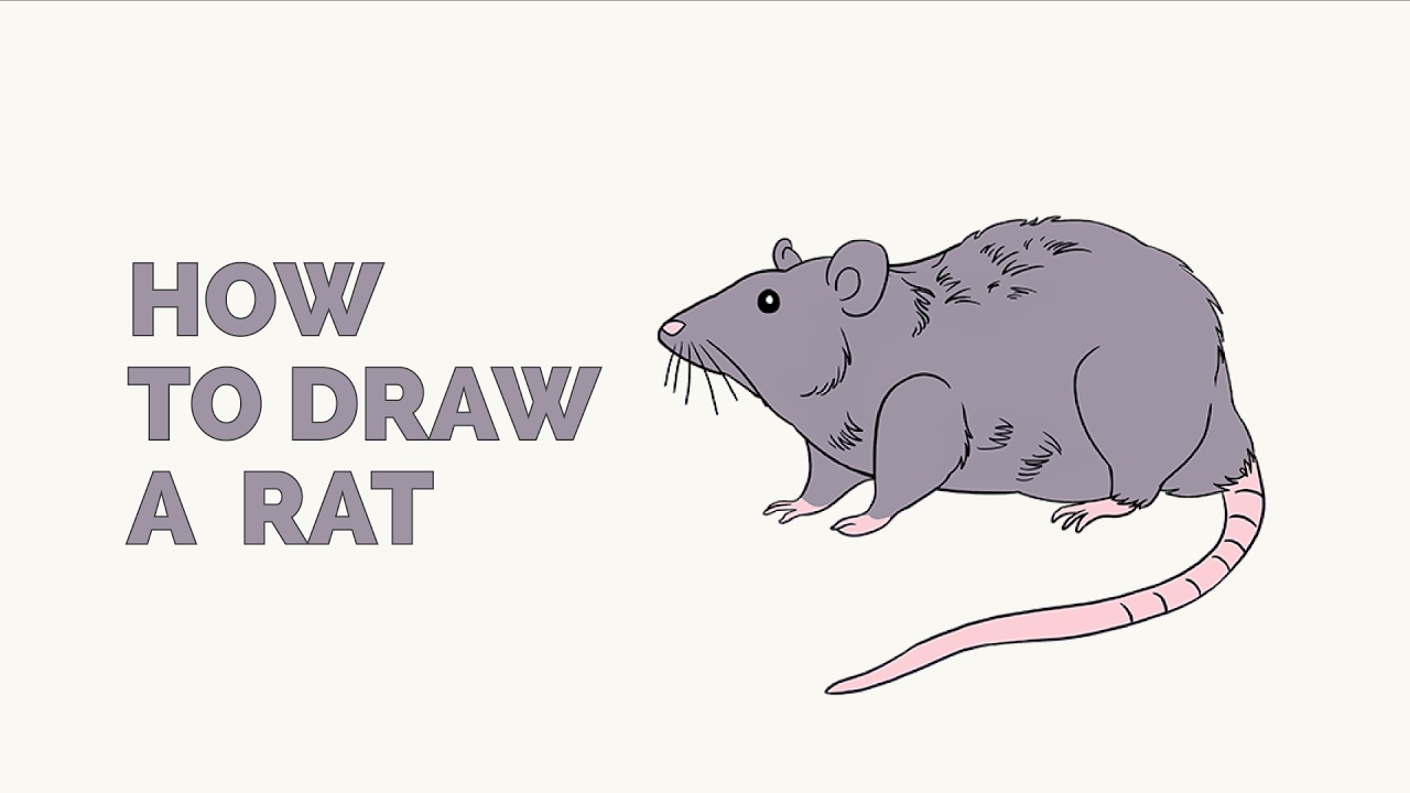 How to Draw a Rat - Easy Step-by-Step Drawing Tutorial ...