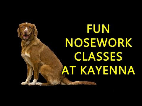 Train Your Dog to Find Scent, Calgary Nosework Classes start April 24, 2017