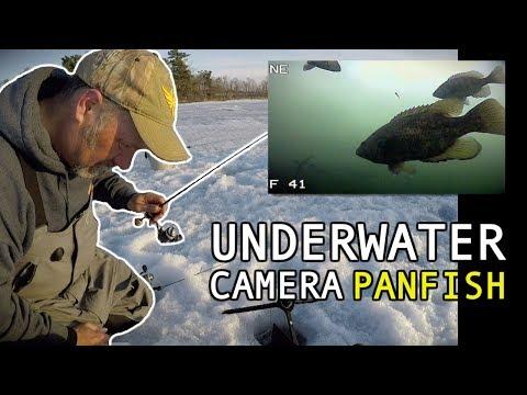 Ice Fishing Panfish With Wax Worms