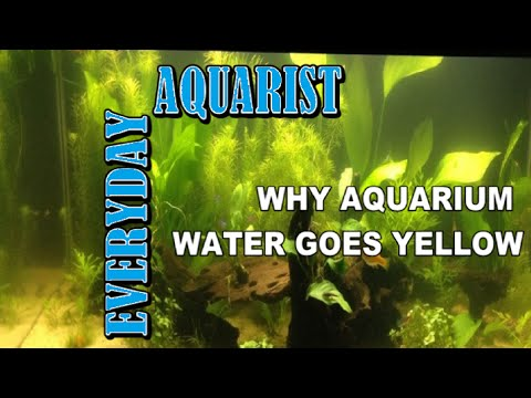 How to stop yellow aquarium water youtube for Why is my fish tank water cloudy