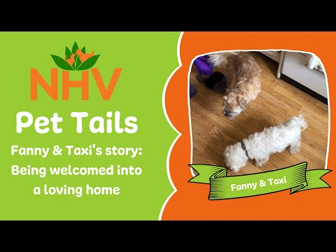 NHV Pet Tails: The Story of Fanny & Taxi's Forever Home