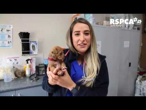 Update on 12 abandoned puppies: vet check time!