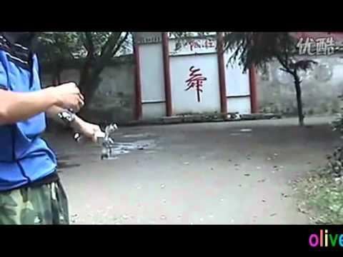 "Outdoor competitive sport SLINGSHOT Hunter catapult  ""Eagle of Sniper"" G7   Arrow Catapult"