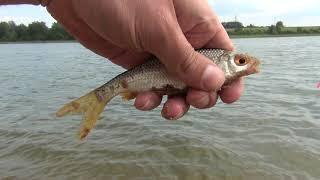 Летняя рыбалка на озере.  Лов плотвы.  ЧАСТЬ1