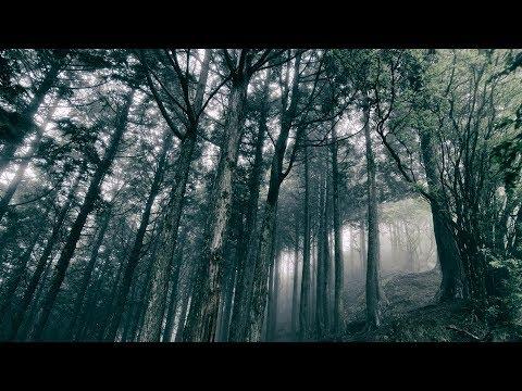 Akira Kosemura - In The Dark Woods (Trailer)