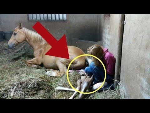 Cuando esta yegua dio a luz, los ayudantes vieron la placenta e hicieron un asombroso descubrimiento