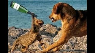 Cuộc chiến không hồi kết giữa chó và mèo 😭😭😭