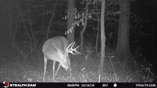 Nice 8 Point Buck up close 2016