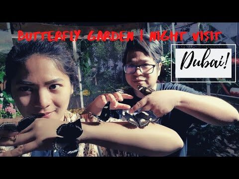 night-visit -butterfly-garden -dubai-uae
