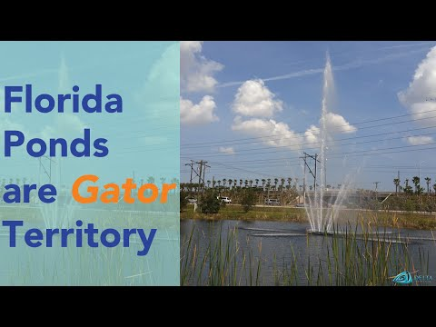 Florida's Waters Are Gator Territory | Delta Fountains