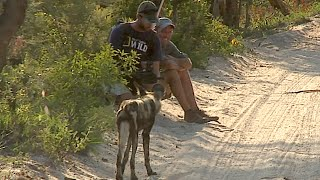 James Hendry meets wild dogs on foot