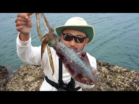 CATCH AND COOK DELICIOUS SQUID!! OSAKA RECIPE | Fishing In Japan