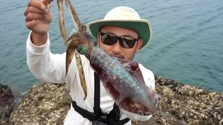 CATCH AND COOK DELICIOUS SQUID!! OSAKA RECIPE