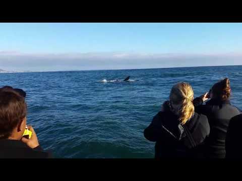 Hermanus 2017 - Whale Watching