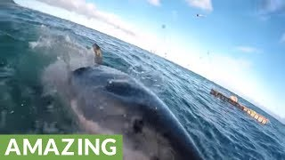 Horrifying up-close footage of attacking Great White Shark