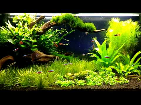 my plants aquarium juwel 180 liter enjoy youtube. Black Bedroom Furniture Sets. Home Design Ideas
