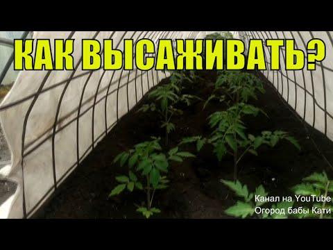 Высаживаем томаты в открытый грунт. Что добавить в лунку для хорошего урожая помидор?