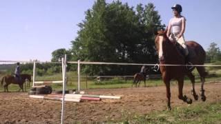 Wild horses. ♥