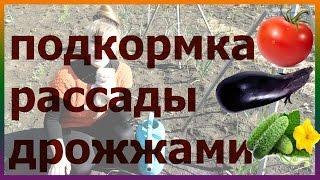 видео Удобрение для рассады помидор