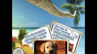 Secrets To Dog Training By Daniel Stevens Download