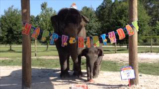 Mike celebrating first birthday