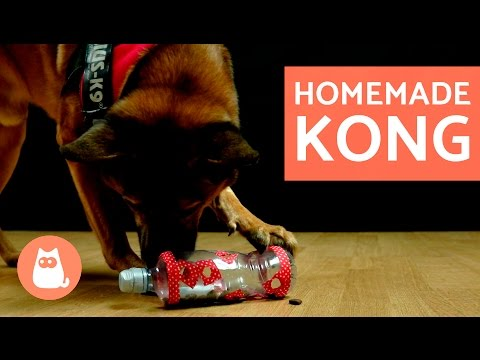 diy-dog-toys---kong-toy-for-dogs