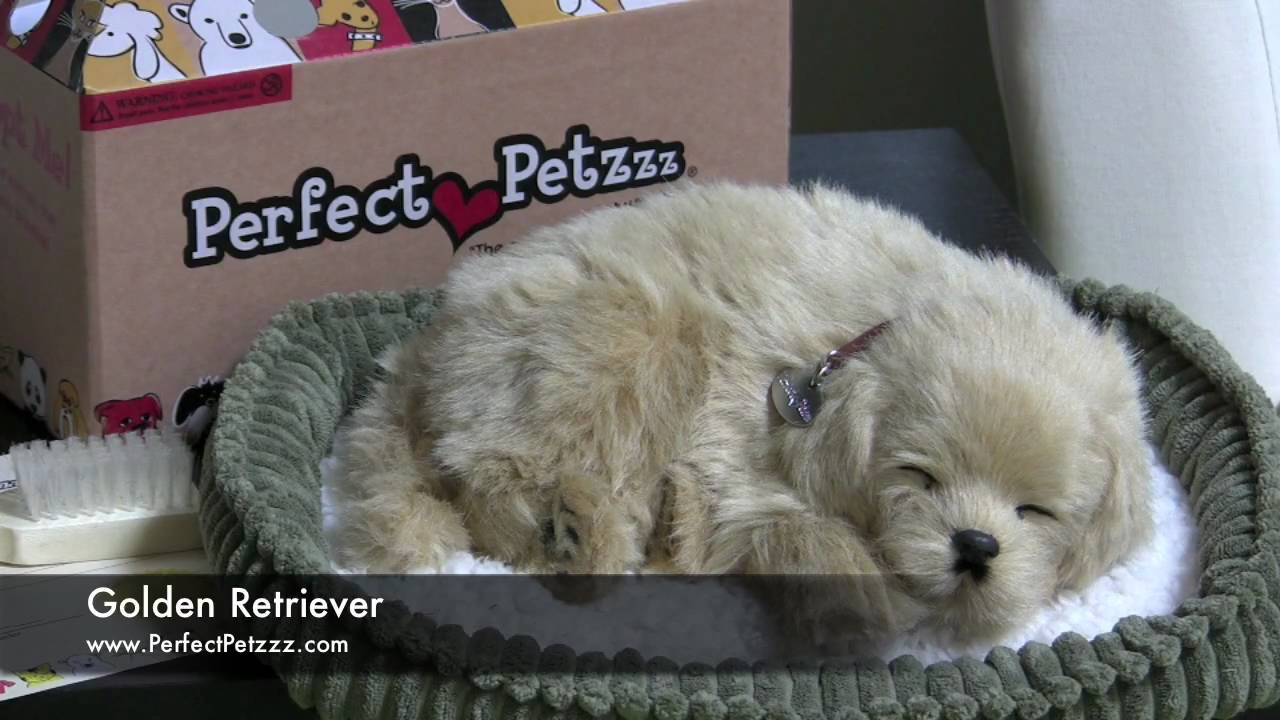 Perfect Petzzz Golden Retriever Youtube