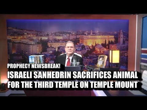 THIRD TEMPLE! ISRAELI SANHEDRIN SACRIFICES ANIMAL FOR NEW TEMPLE