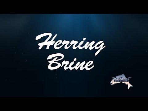 Northwest Bait & Scent - Herring Brine