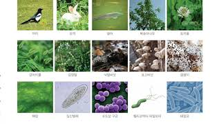 [초등과학 5-1 무료강의] 5. 다양한 생물과 우리 …