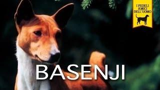BASENJI trailer documentario (razza canina)