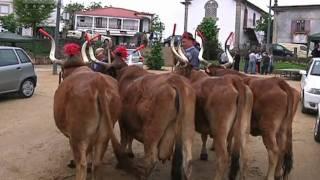 Concurso Pecuário da Feira de Fermil em Celorico de Basto